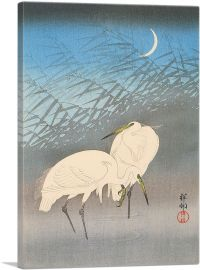 Egrets and Reeds in Moonlight