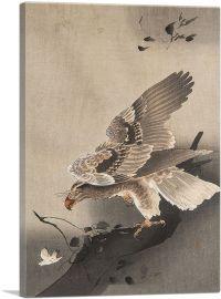 Hawk Hunting
