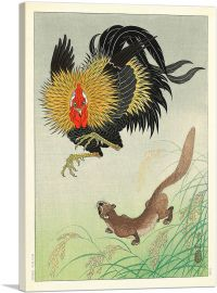A Rooster and Weasel in a Barley Field