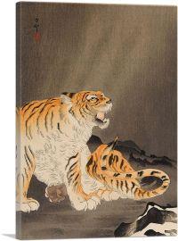 Roaring Tiger Near Rocks