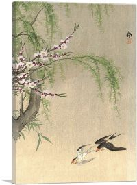 Two Barn Swallows in Flight With Willow Branch and Flowering Cherry