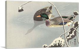Wild Ducks in Lotus Pond