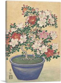 Bloeiende Azalea in a Pot