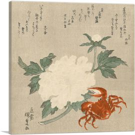 Crab and White Flower 1835