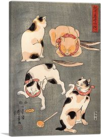 Four Cats in Different Poses