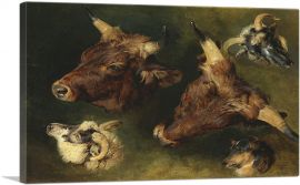Studies of Cattle and Sheep