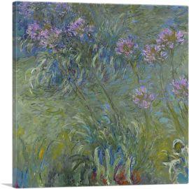 Agapanthus Flowers