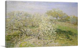 Spring - Fruit Trees in Bloom