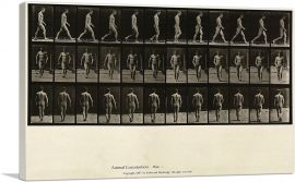 Man Walking Locomotion Plate 1 1887