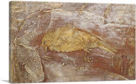 Dead Bird 1890