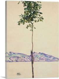 Little Tree - Chestnut Tree at Lake Constance 1912