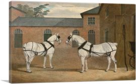 Grey Carriage Horses in the Coachyard at Putteridge Bury Hertfordshire