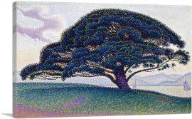 The Bonaventure Pine 1893