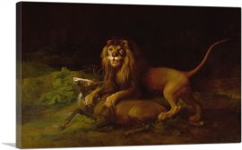 A Lion Attacking a Stag