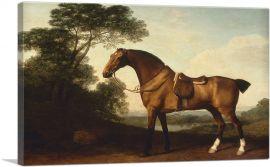 A Saddled Bay Hunter