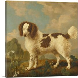 Brown and White Norfolk - Water Spaniel 1778